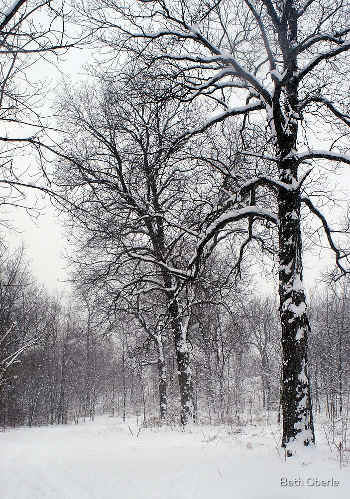 Walking in the Winter Woods by Beth Oberle