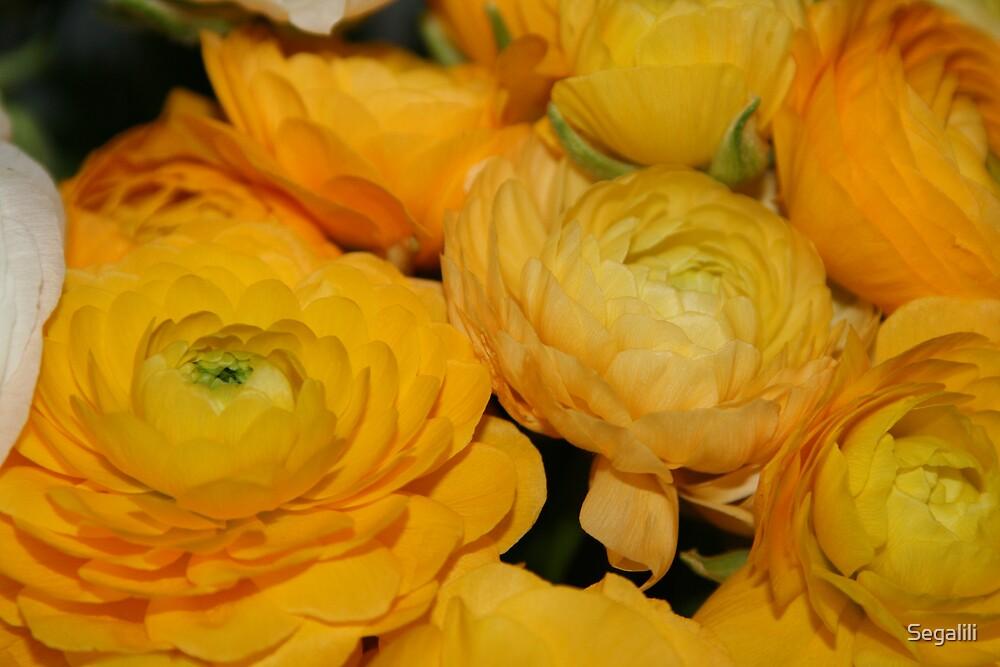 Yellow Buttercups by Segalili
