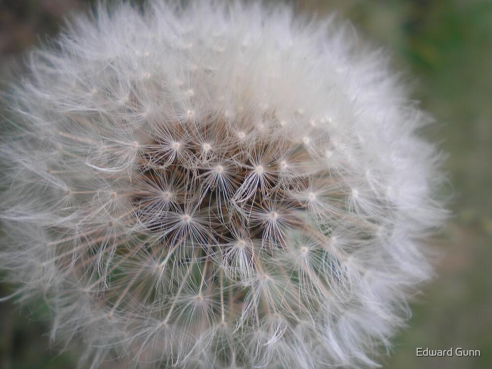 Seeds of Change by Edward Gunn