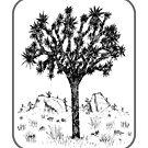 Joshua Tree (Grenze) von Hinterlund
