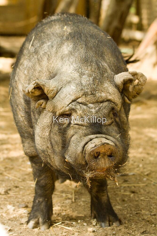 its a pig of a job... by Ken McKillop
