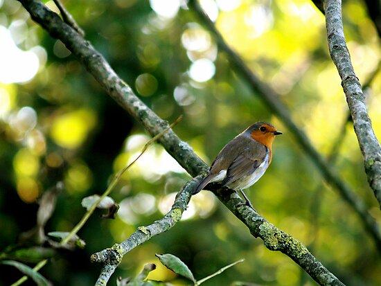 Robin by Maxwell Ash