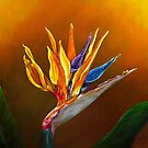 «Bird of Paradise flower» de Zina Stromberg