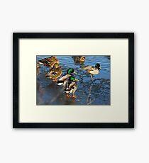 Daytime Ballet :) Framed Print