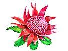 Waratah Flower by Linda Callaghan