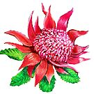 Waratah Flower by Linda Callaghan