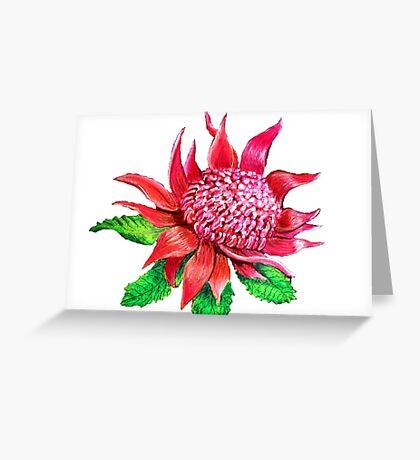 Waratah Flower Greeting Card