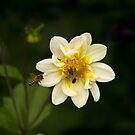 Two Bees or not Two Bees by Clare Colins
