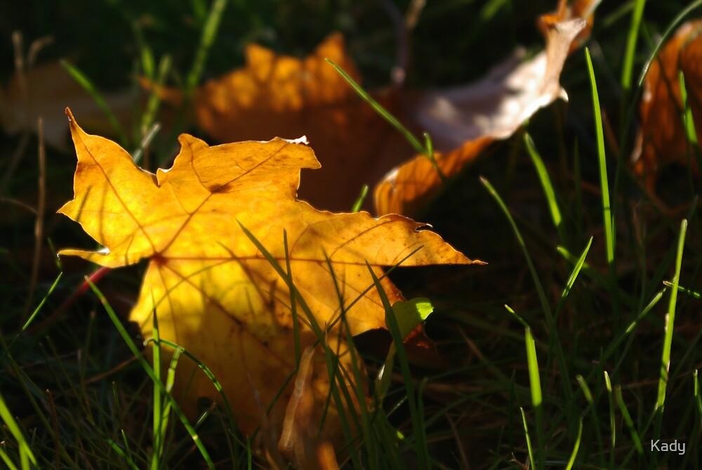 Great fall by Kady