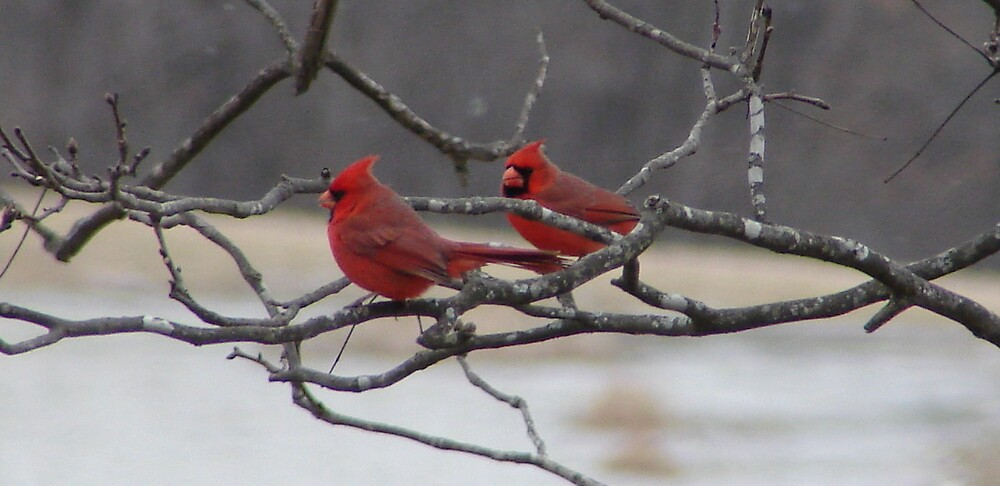 Cardinals by inventor