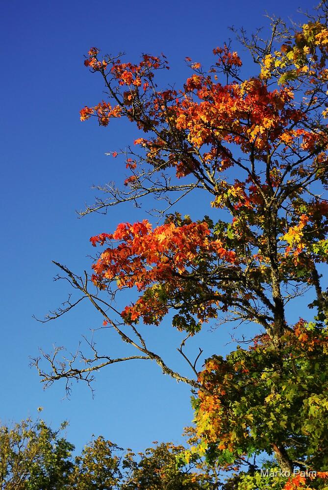 Autumn Tree by Marko Palm