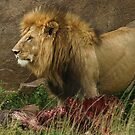 King of beasts by Owed To Nature