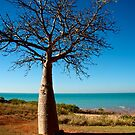 Boab Tree - Town Beach, Broome by Extraordinary Light