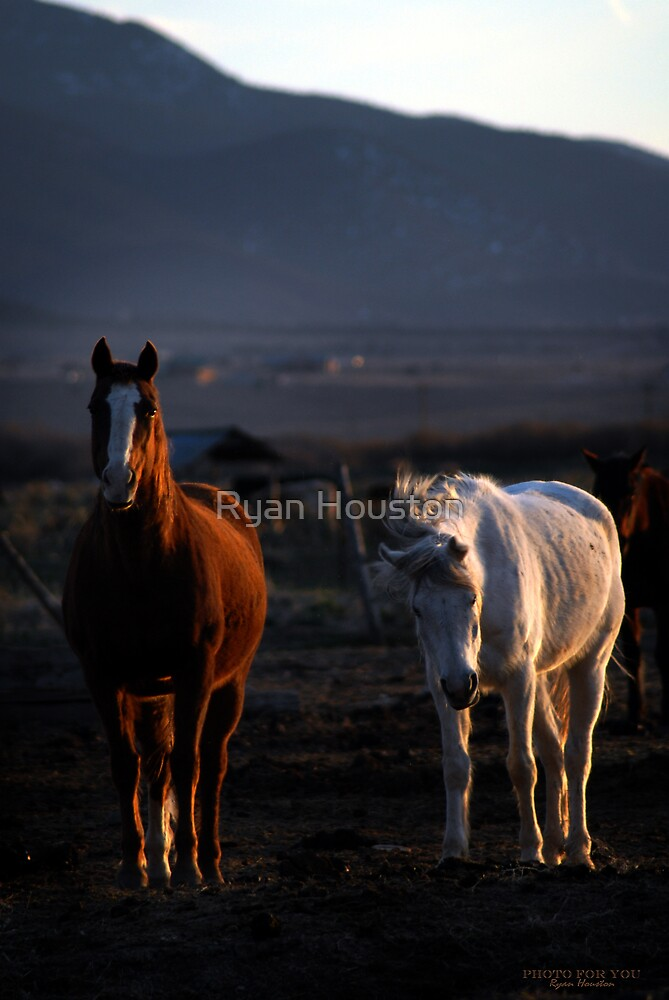 Horses - End of the Day by Ryan Houston