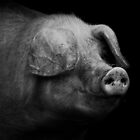 Dark Hog by Yampimon