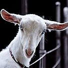 Goatic Beauty by Alex Preiss