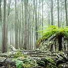Coolah Tops Tree Fern by Candice O'Neill