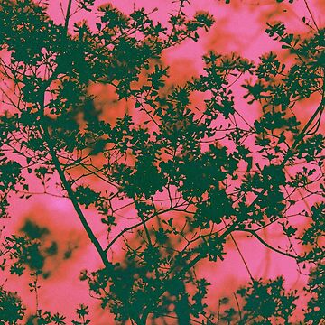 rose coloured trees by thelotuspress