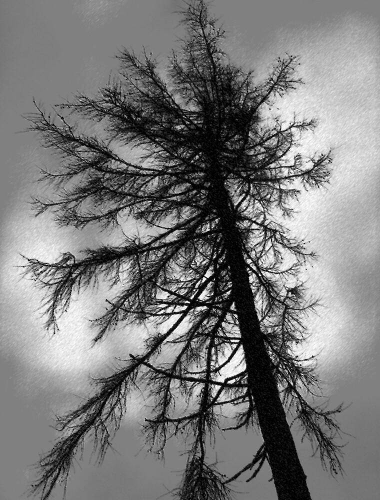 NEGATIVE NATURE by EMMET MC ELHINNEY