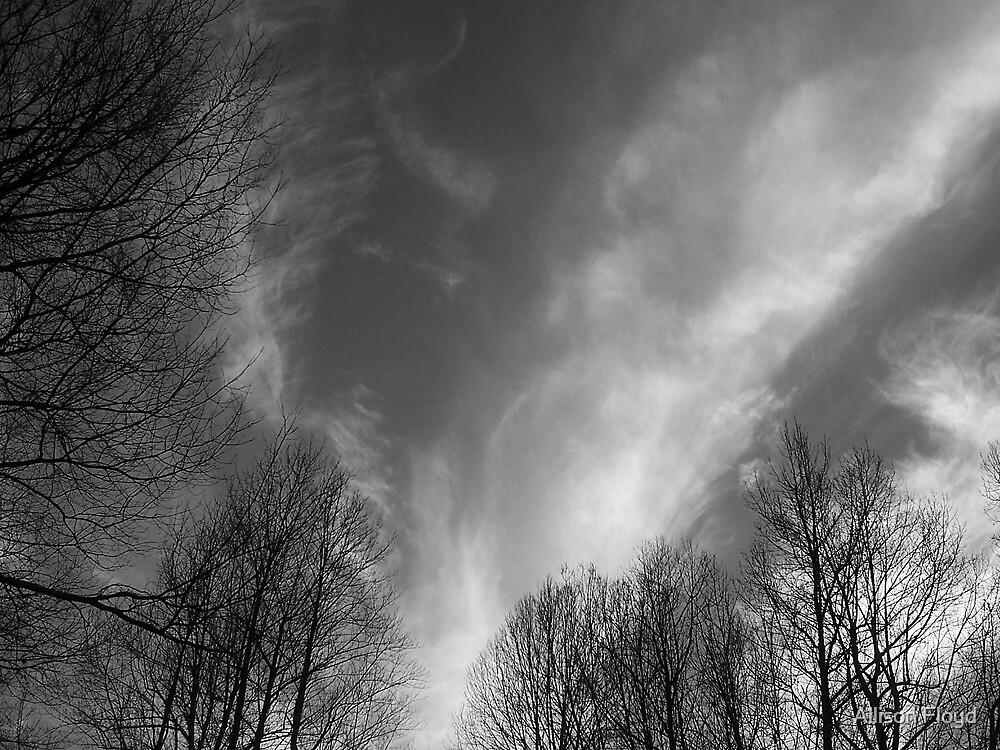 Big Sky by Allison Floyd