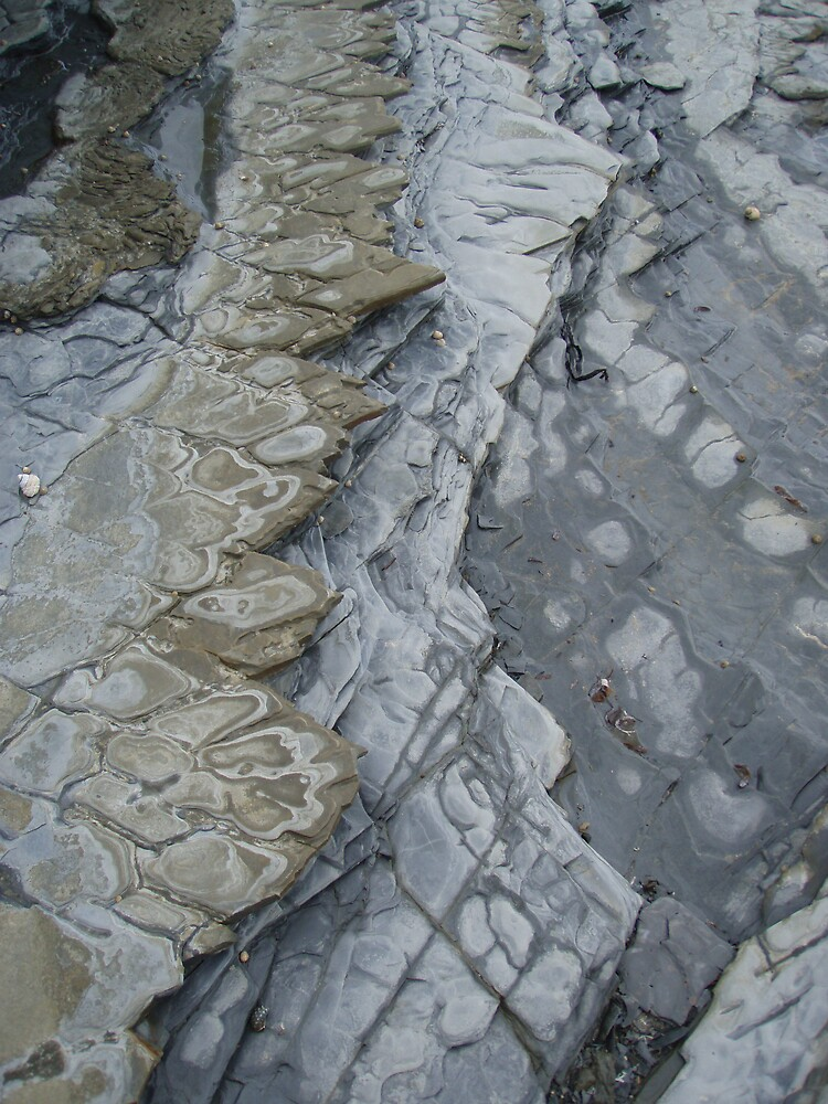 pretty patterned rocks on the foreshore at Wynyard  by gaylene