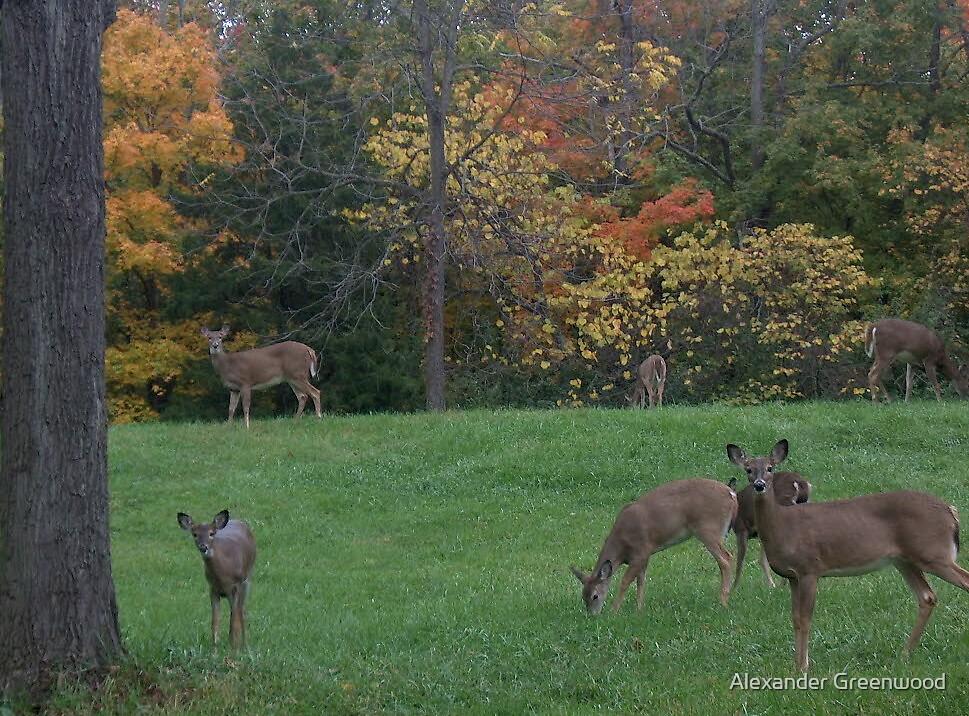 Deer Friends by Alexander Greenwood