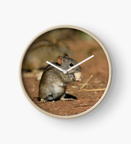 Striped Grass Mouse (Rhabdomys pumilio) Clock
