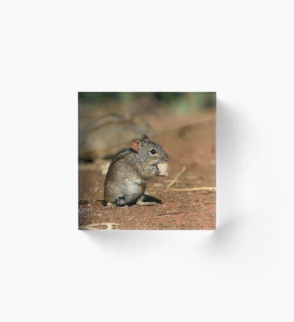 Striped Grass Mouse (Rhabdomys pumilio) Acrylic Block