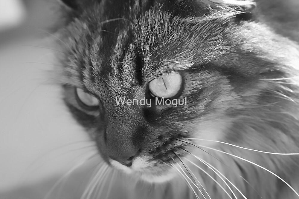 Kitty Closeup!!!!! by Wendy Mogul