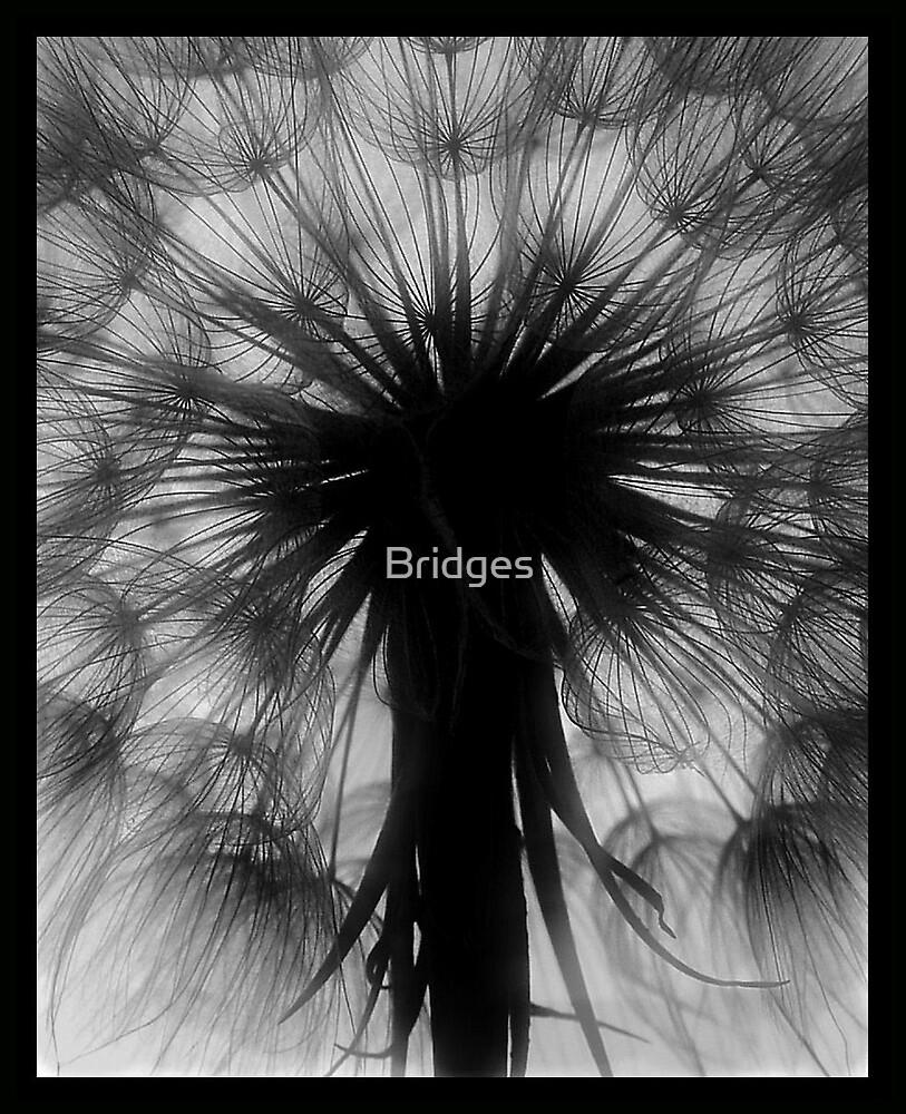 Airy by Bridges