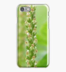 Broadleaf Plaintain iPhone Case/Skin