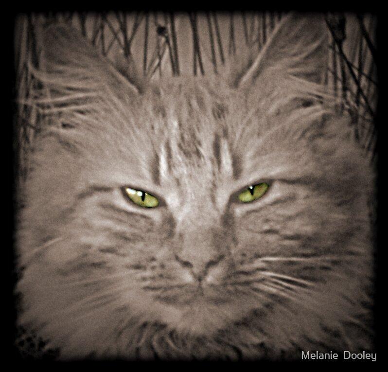Evil Puss by Melanie  Dooley