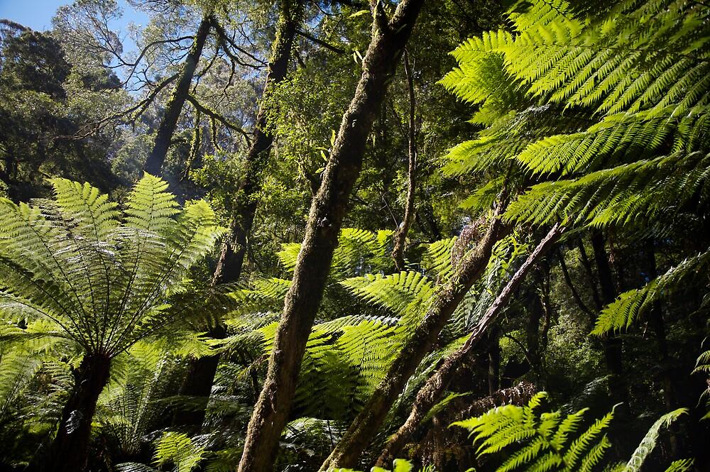 Otway Ferns by Carly Michael