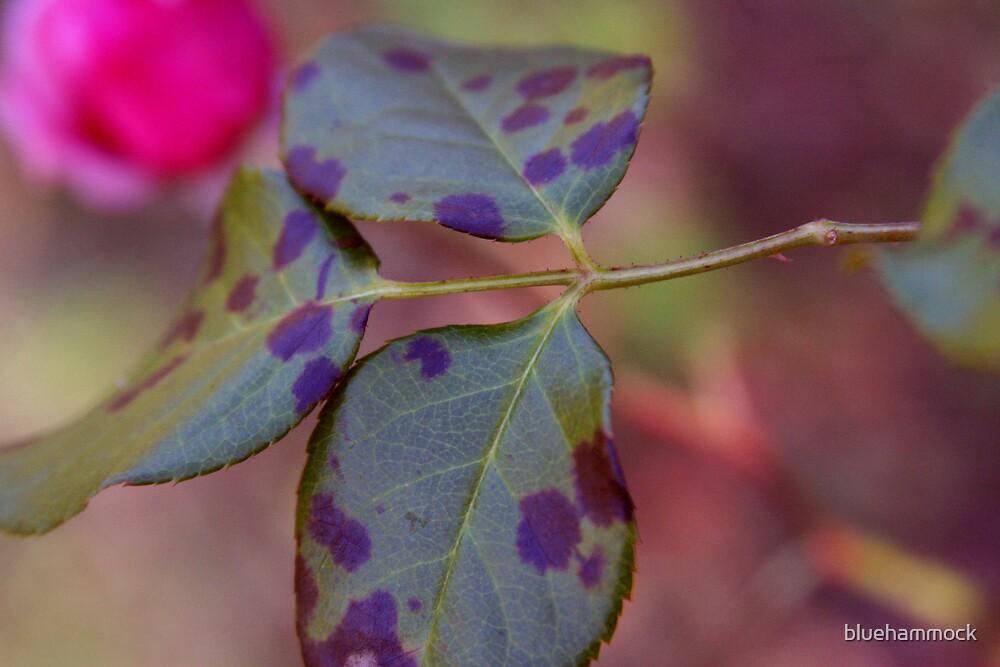 three leaves by bluehammock