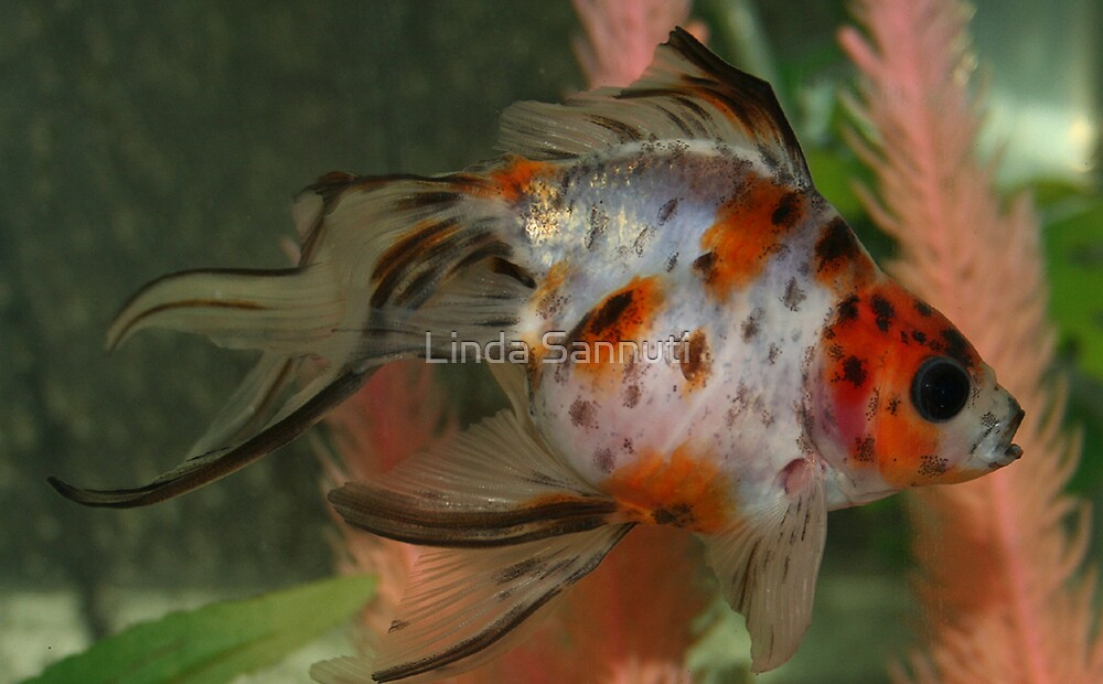 my fish  by Linda Sannuti