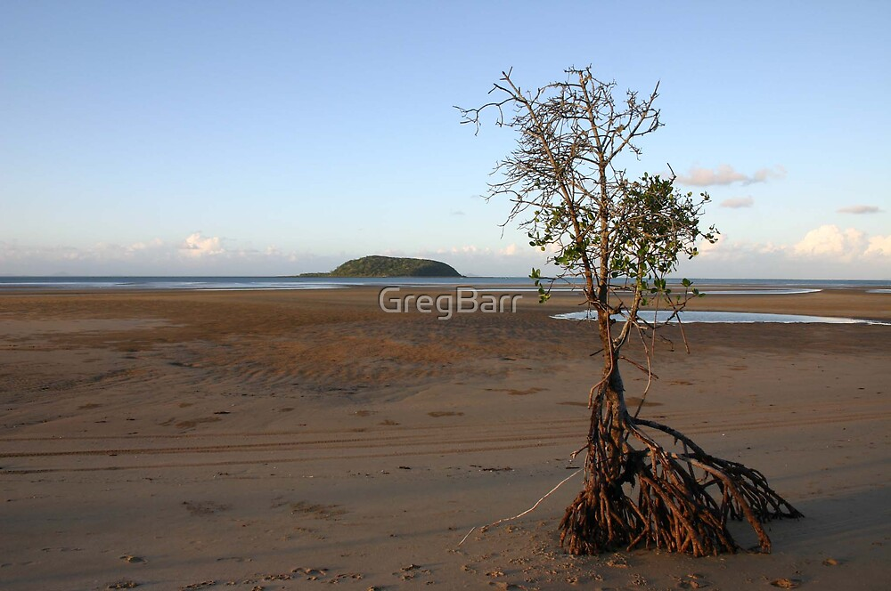 Mangrove at Shoal Point by GregBarr
