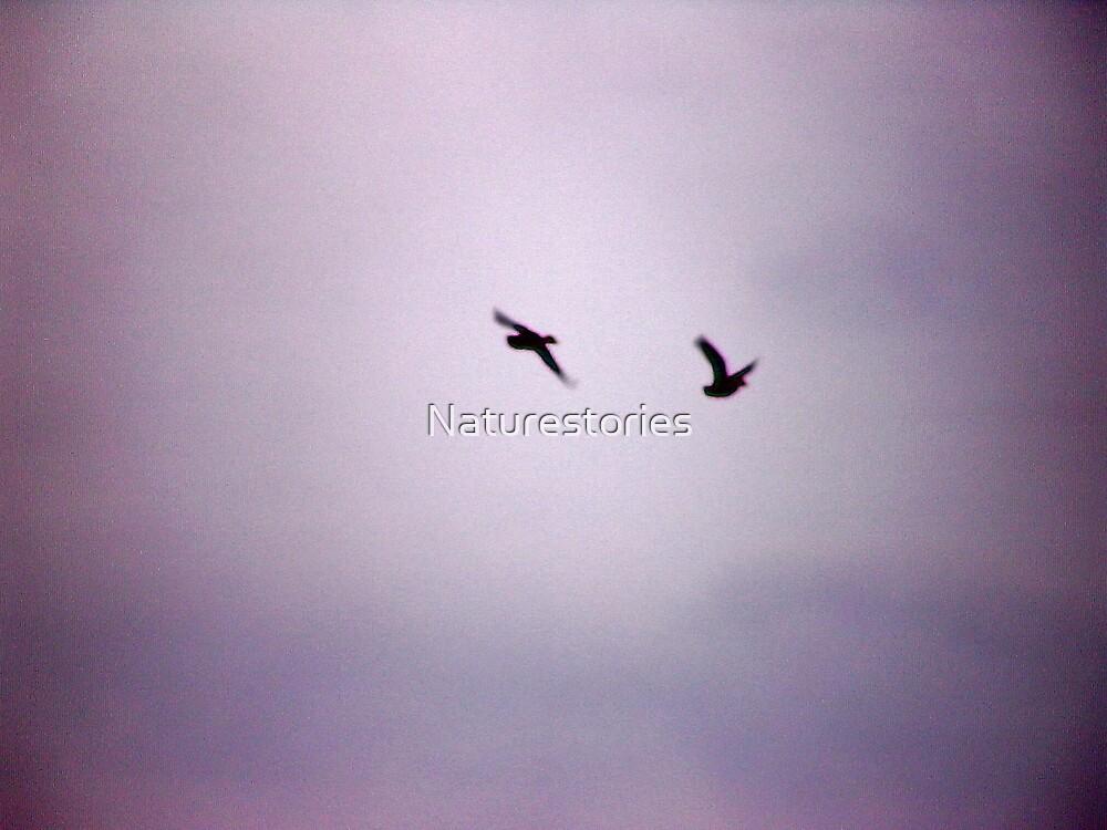 silhouette birds by Naturestories