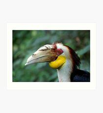 Hornbill Headshot Art Print