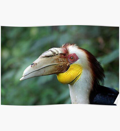 Hornbill Headshot Poster