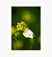 White Butterfly Yellow Floral Art Print
