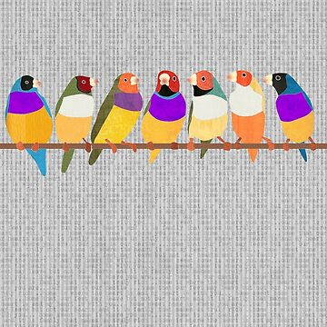 Lady Gouldian Finches by janetcarlson