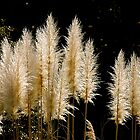 Pompus Grass by TJ Baccari Photography