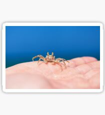 Little crab on human hand against blue sky and green ocean Sticker
