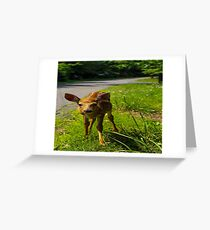 Deer at a Glance  Greeting Card