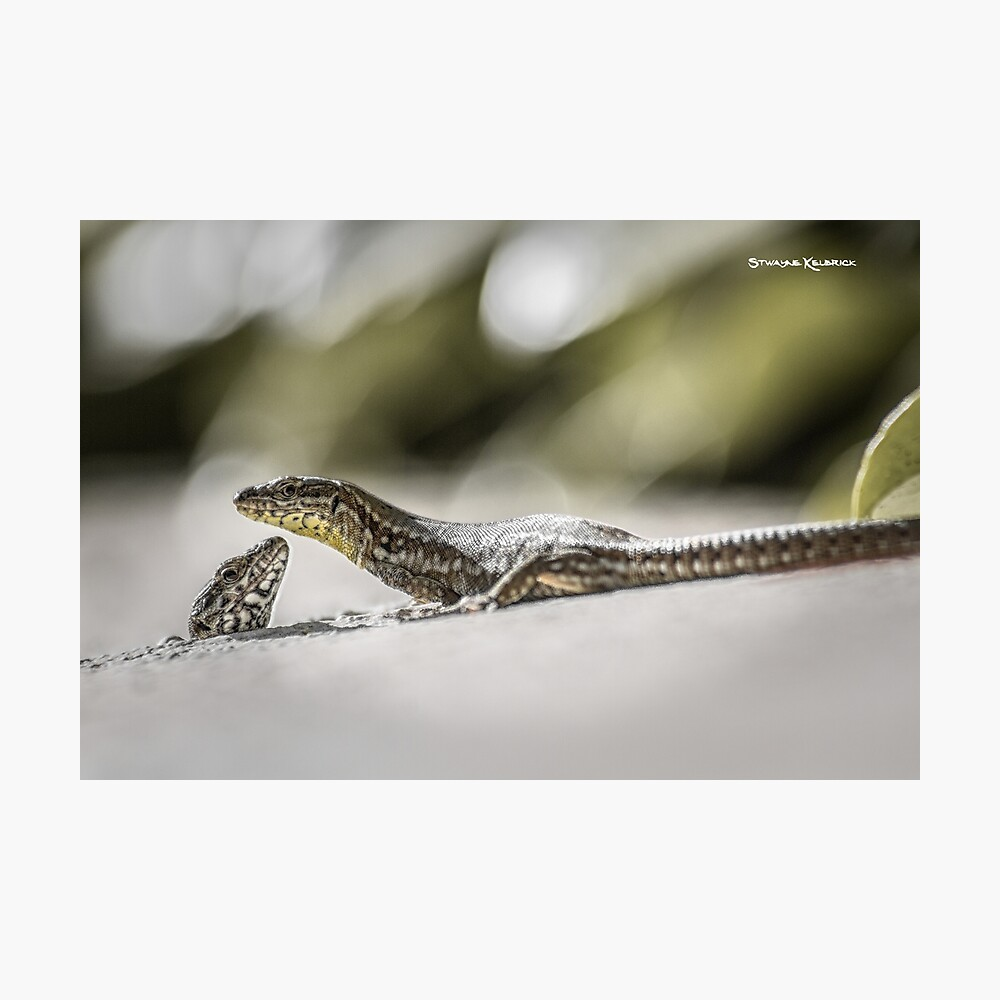 The charming lizards Photographic Print