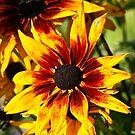 Flower on Fire by autumnwind