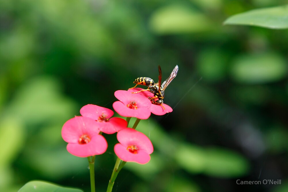 Wasp on a Flower by Cameron O'Neill