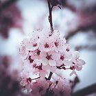 095 - Blossom by CarlaSophia
