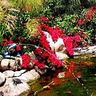 Peaceful Pond ~ San Diego, California by Marie Sharp