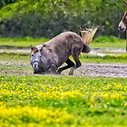 Rolling in the Dirt by TJ Baccari Photography